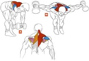 Как правильно качать мышцы спины без последствий