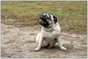 топ самых опасных собак по всему миру